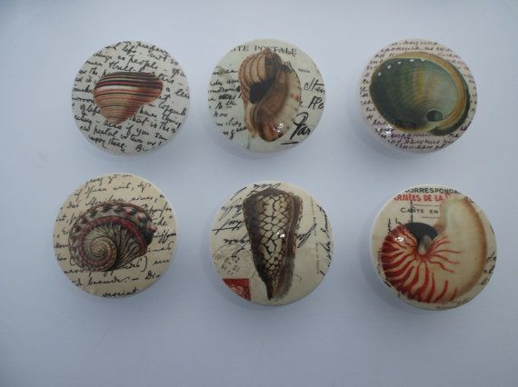 Typography Seashell Print  2 Dresser Drawer  by ReadinginRags