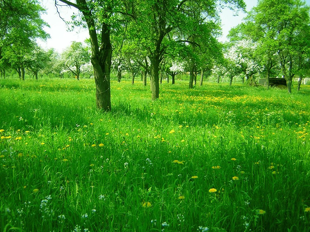 Hd Beautiful Green Grass Wallpaper Grass Wallpaper Grass