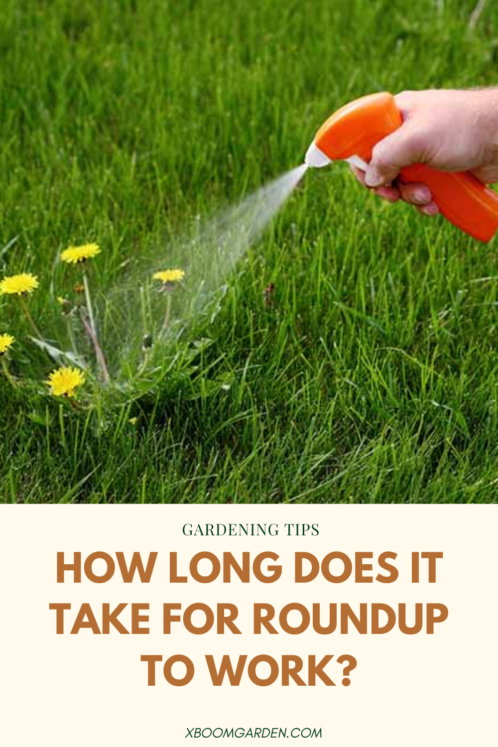 How Long Does It Take For Roundup To Work In 2020 Gardening Tips Take That Roundup