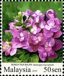 Stamp Bunga Tiga Bulan Hydrangea Macrophylla Malaysia Garden Flowers Mi My 1739 Sn My 1308 Sg My 1669a Flower Stamp Flora Flowers Hydrangea Macrophylla