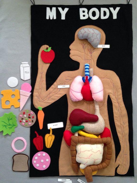 Felt human organs, felt my body mat, felt story, play food, human ...