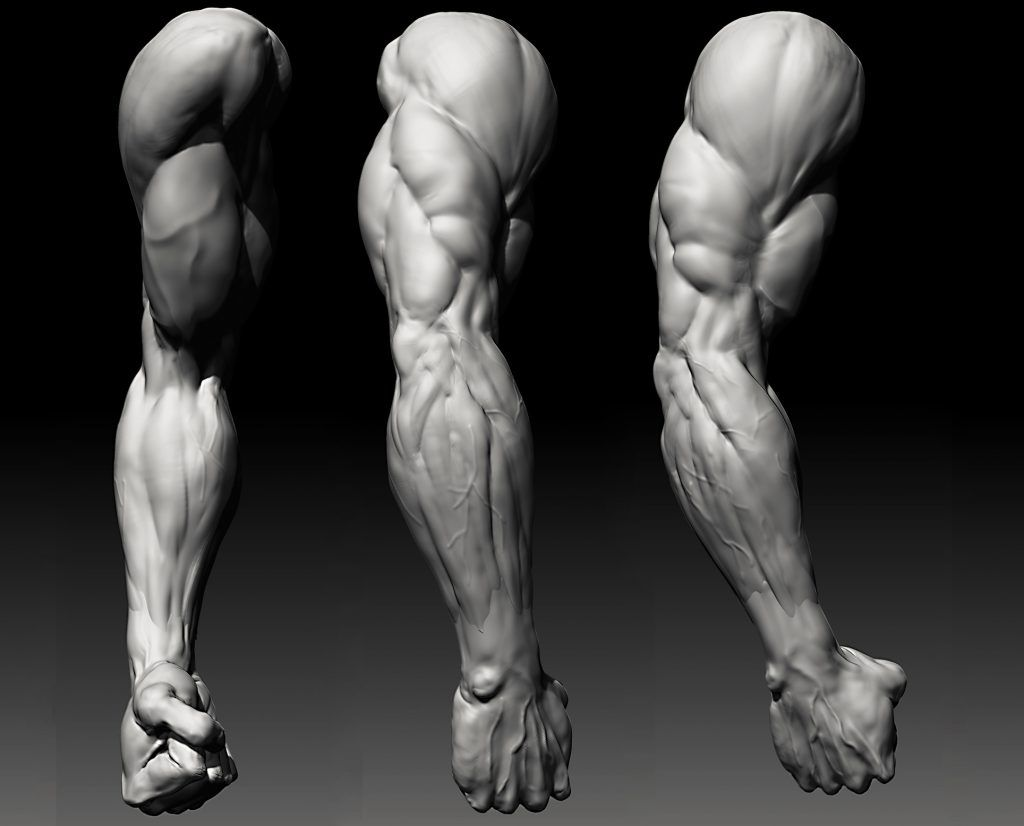 Image result for drawing arms and backs | Anatomy drawing ...