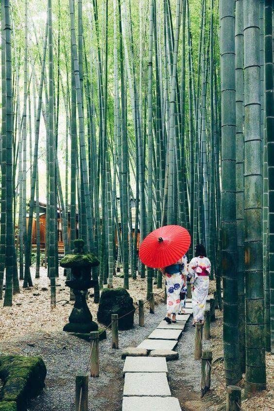 Stone Path In Bamboo Forest Japan Destinations Japan Travel