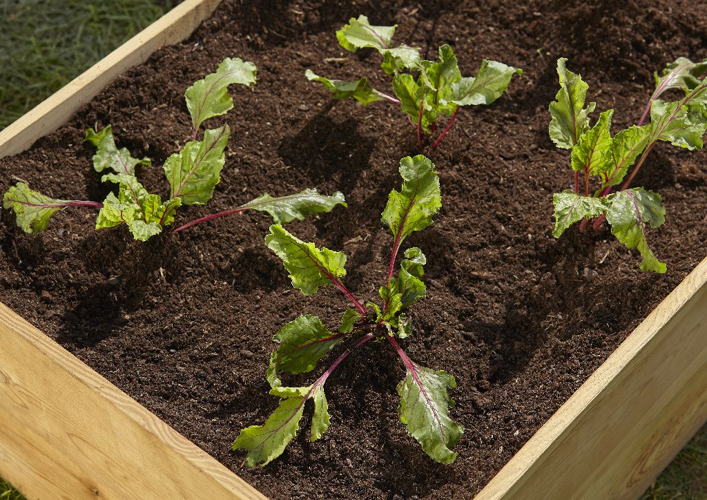 From Potatoes To Peas You Can Grow Your Own Veg No Matter What Your Space We Have A Huge Range Of Kitchen Garden Products To Kitchen Garden Garden Diy Garden