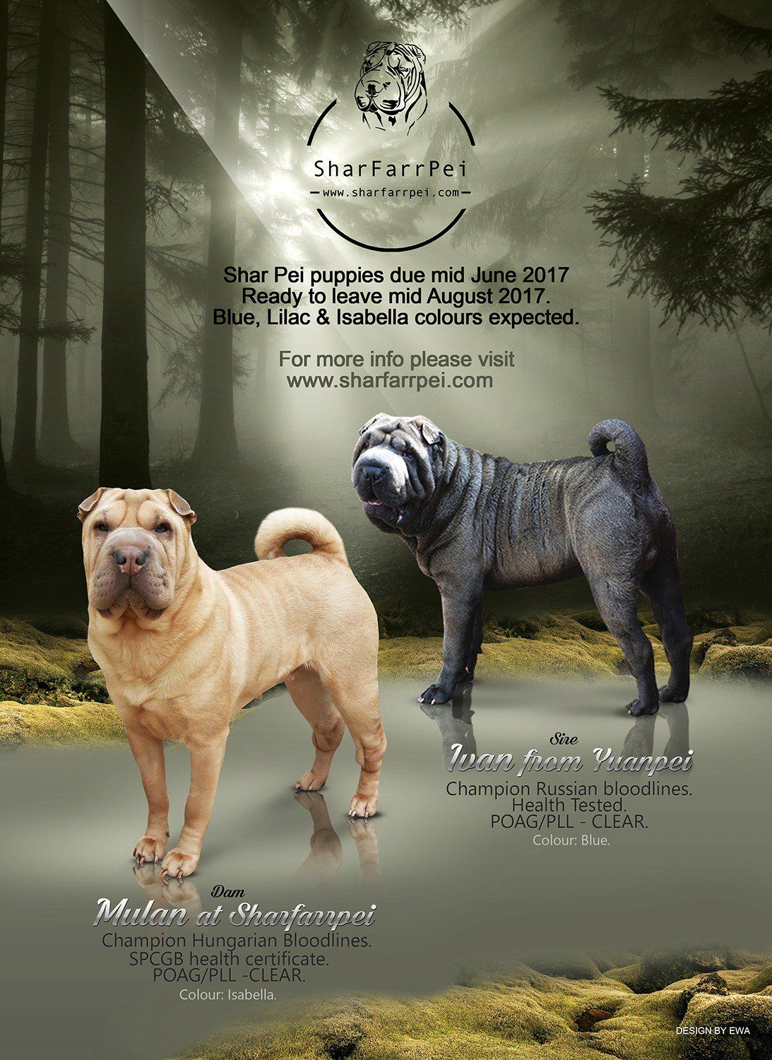 Sharfarrpei On Twitter Shar Pei Puppies Lab Puppies Puppies