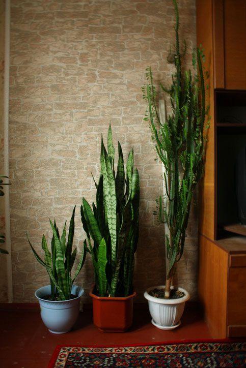 Endlich wieder Durchschlafen! 7 luftreinigende Pflanzen fürs Schlafzimmer #pflanzenimschlafzimmer