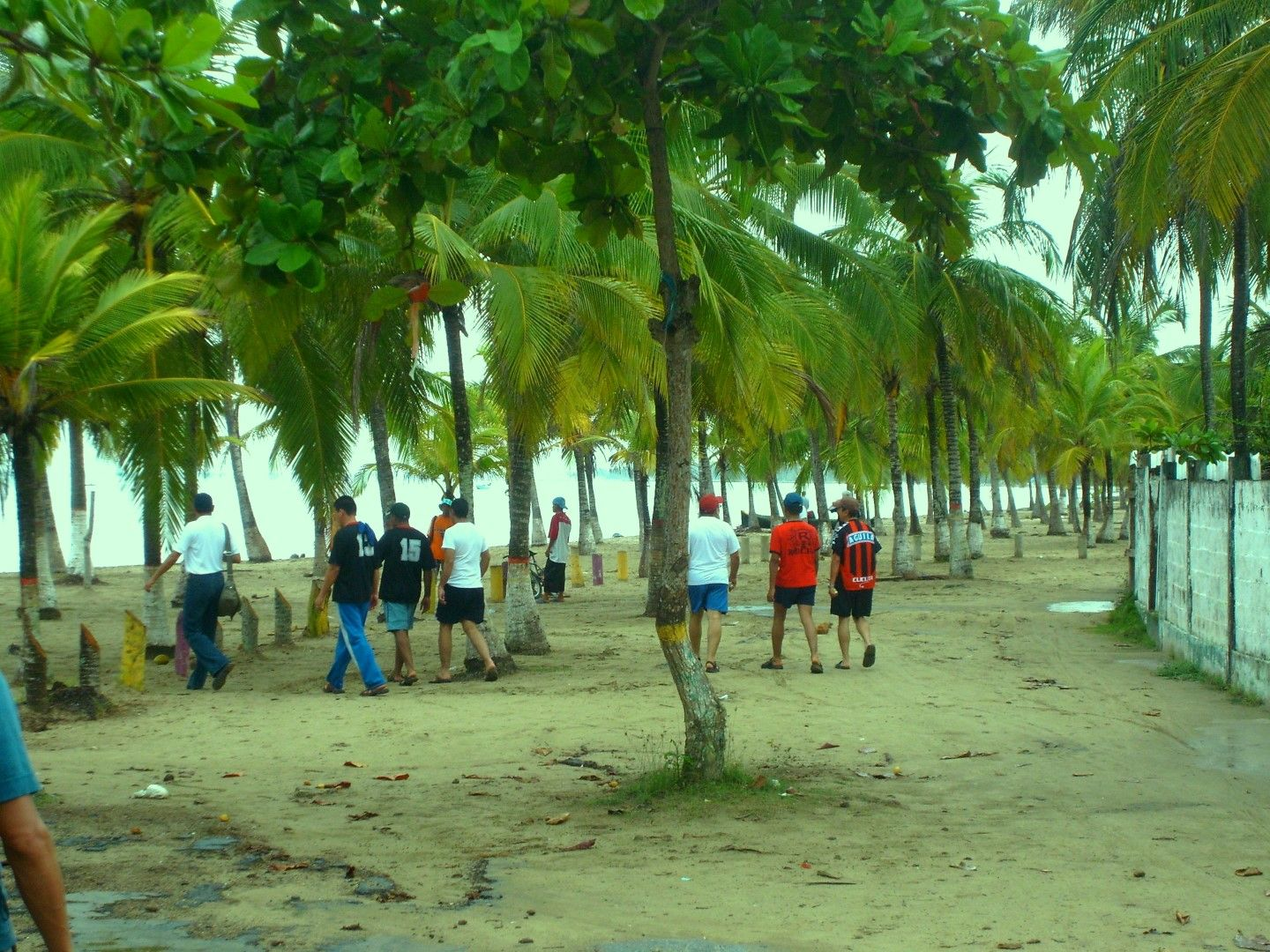 A group of people walking among some palm tress in Tolu