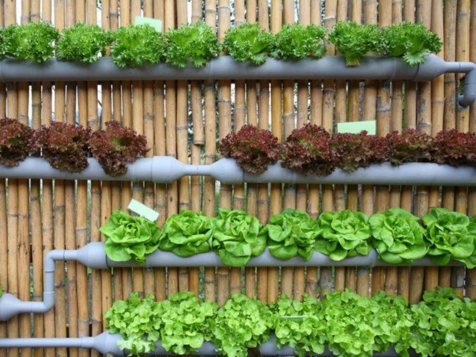Vertical Urban Garden Decorating Idea