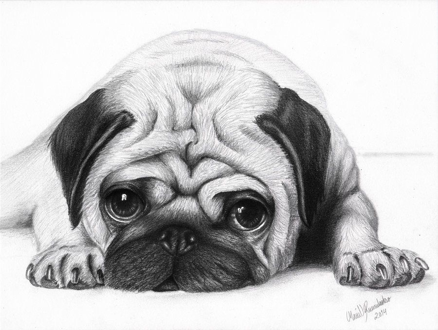 pug puppy sketch - Google Search | Things to Draw | Pinterest | Pug ...