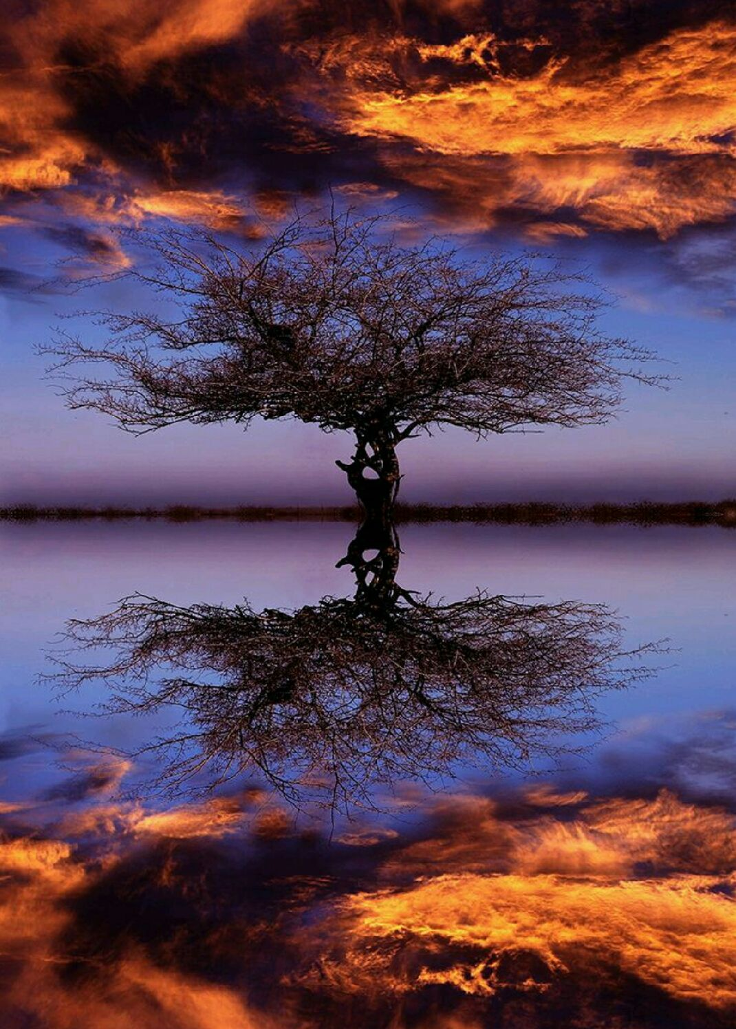 Effect Mirror Tree Reflection Nature Landscape Photography Cloud Fire Reflection Photography Beautiful Nature Photo