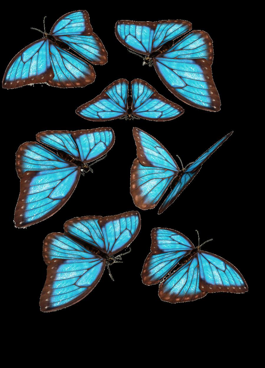 Blue Butterflies By Darkadathea On Deviantart Blue Butterfly Butterfly Drawing Monster Truck Coloring Pages