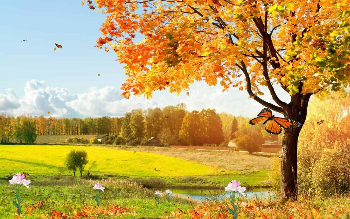 Beautiful Picture For Screen Saver Autumn Landscape Nature Wallpaper Countryside Photography