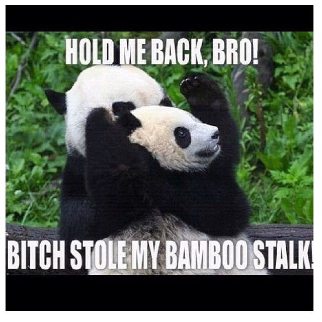 Thug Panda Cuties Pinterest Funny Funny Pictures And Lol