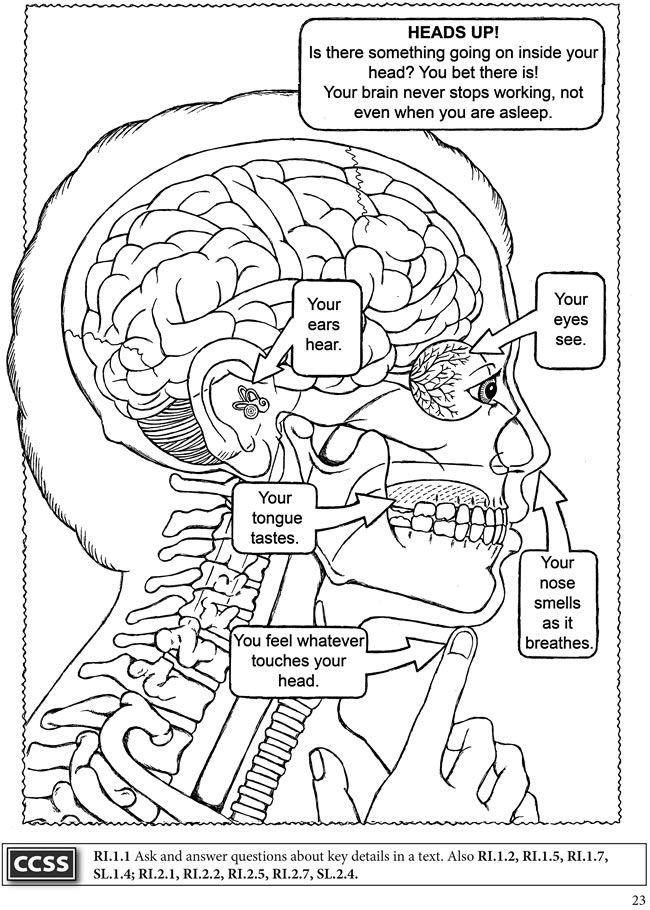 elementary body systems coloring pages - photo#3