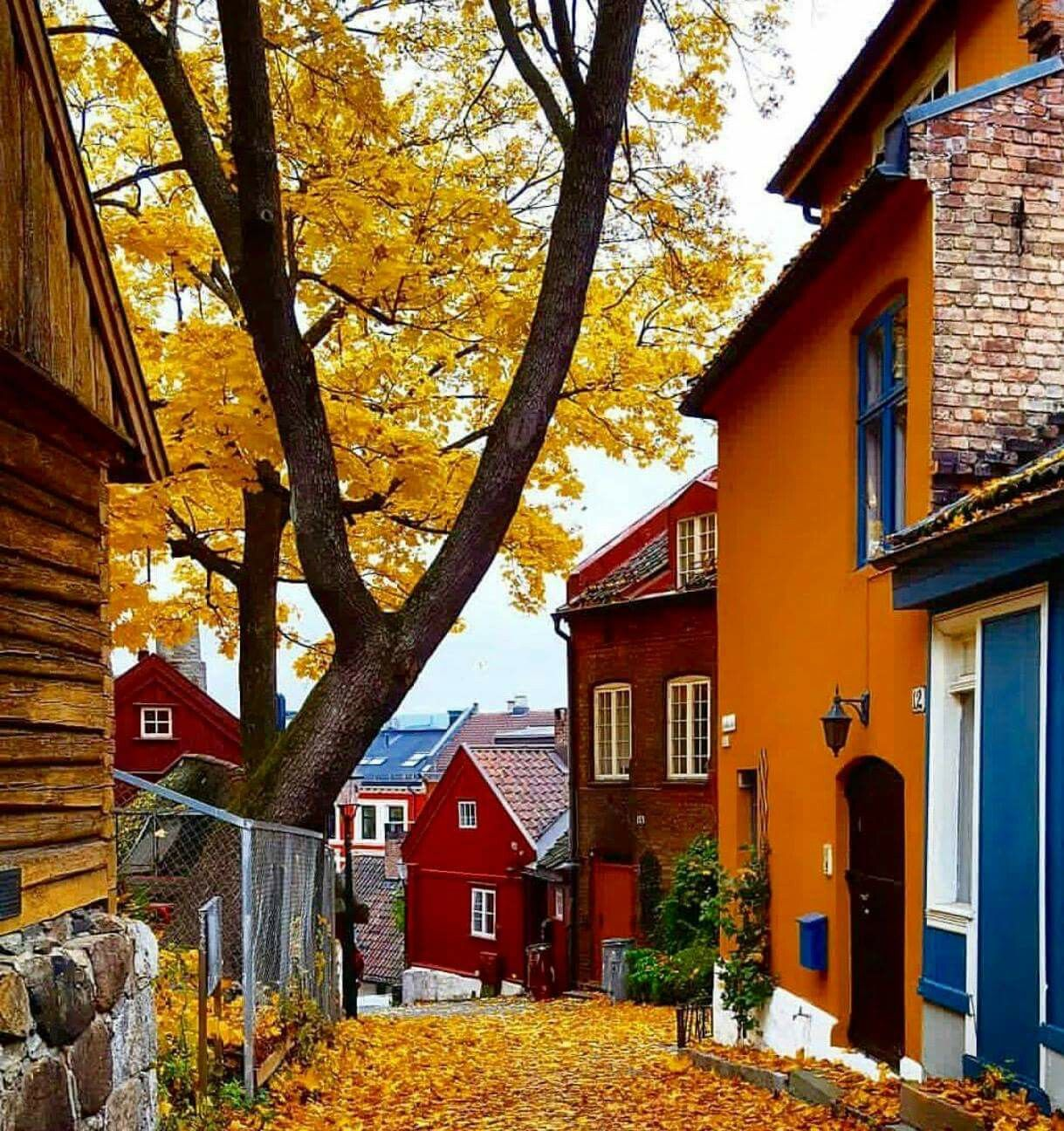 Automne A Odlo Norway House Norway Norway Travel