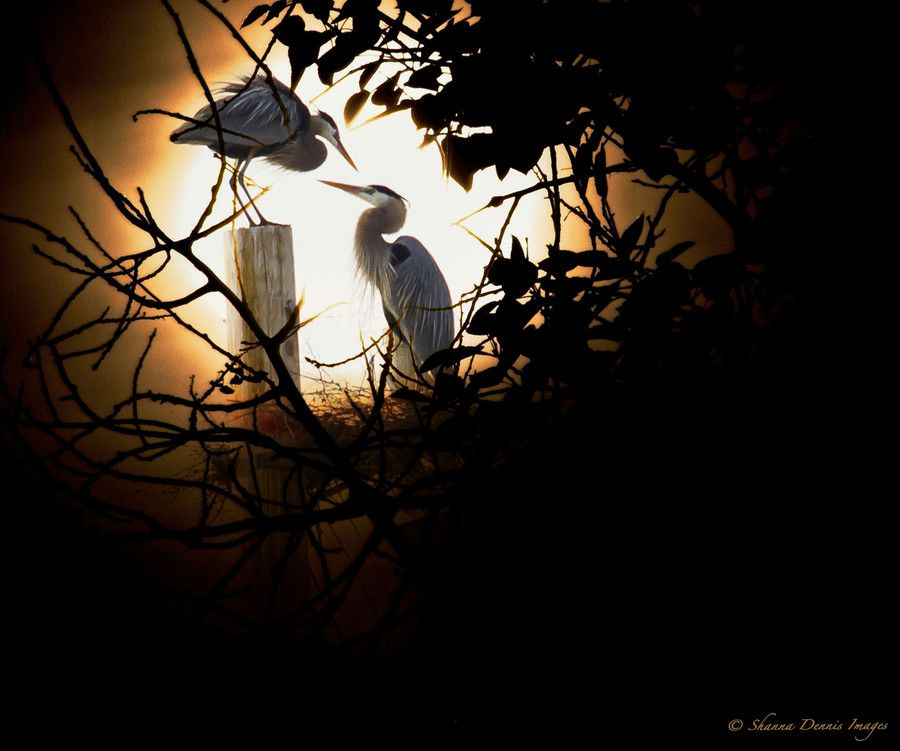 A Moment Shared ~ by Shanna Dennis on 500px