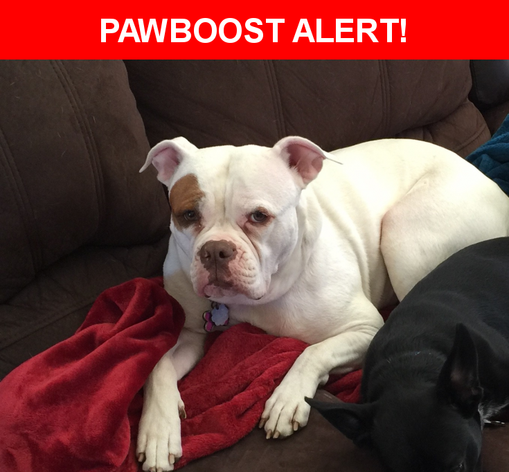 Please spread the word! Zoey was last seen in Largo, FL 33770.  Description: Very friendly, unaltered  Nearest Address: 614 Woodrow Ave Lot # 51 Largo, Fl 33770