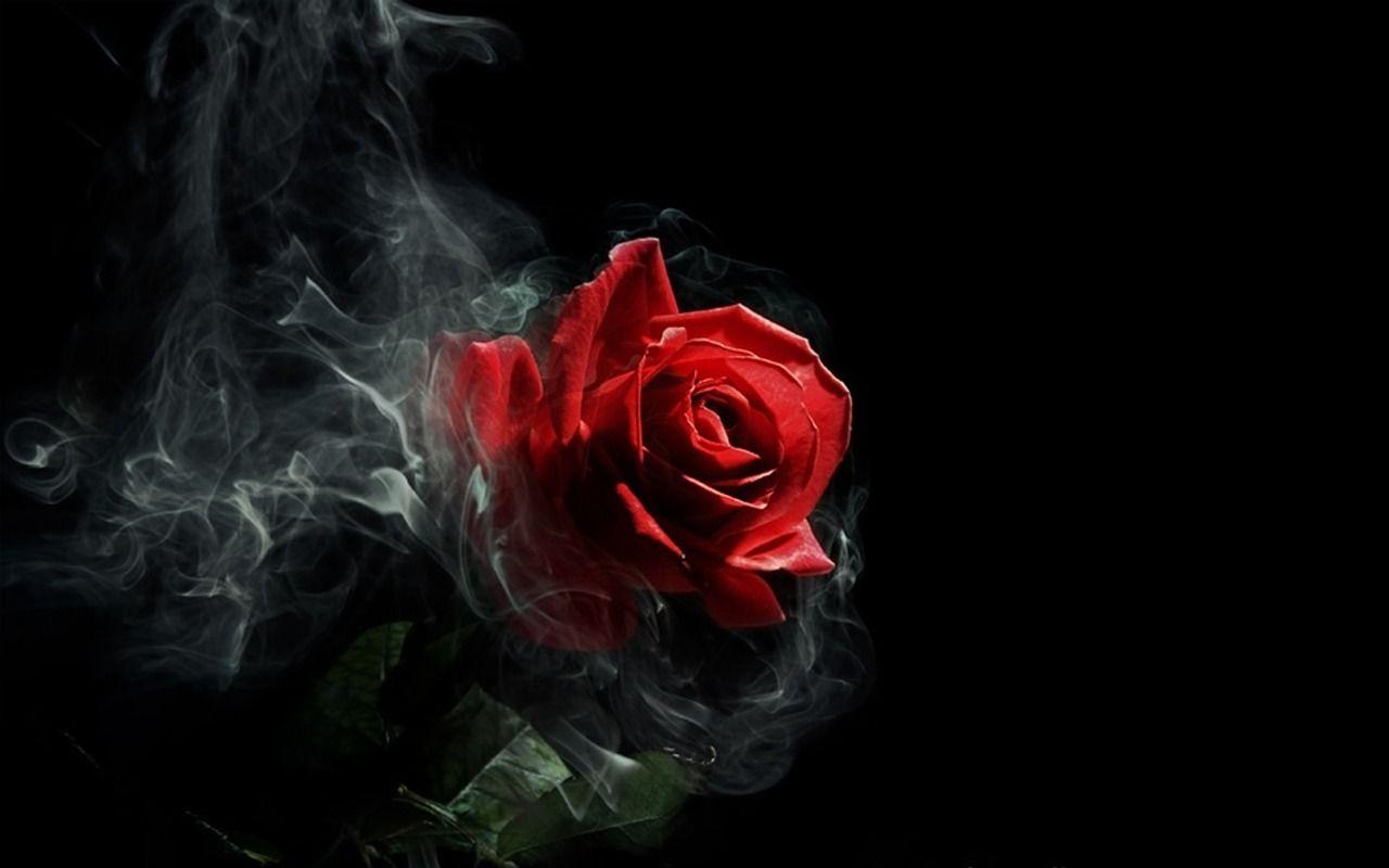 Black Background Red Rose Wallpaper Hd