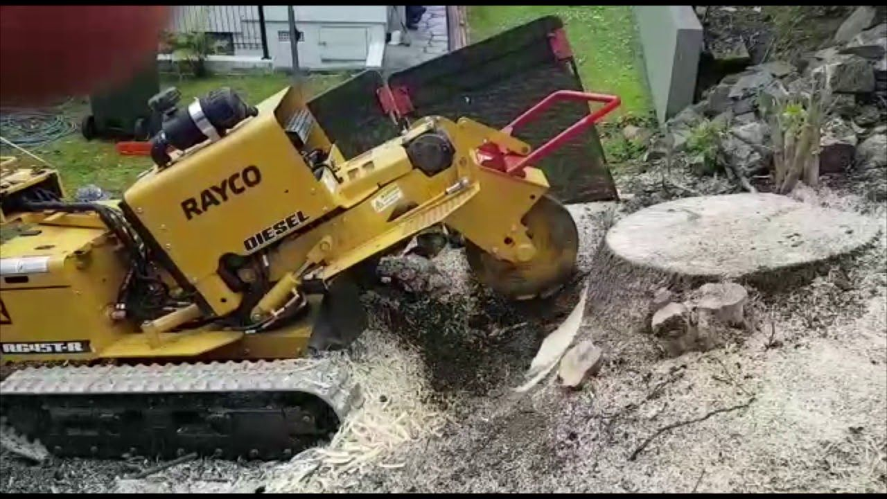 Affordable Tree Stump Grinding & Removal Auckland Daily