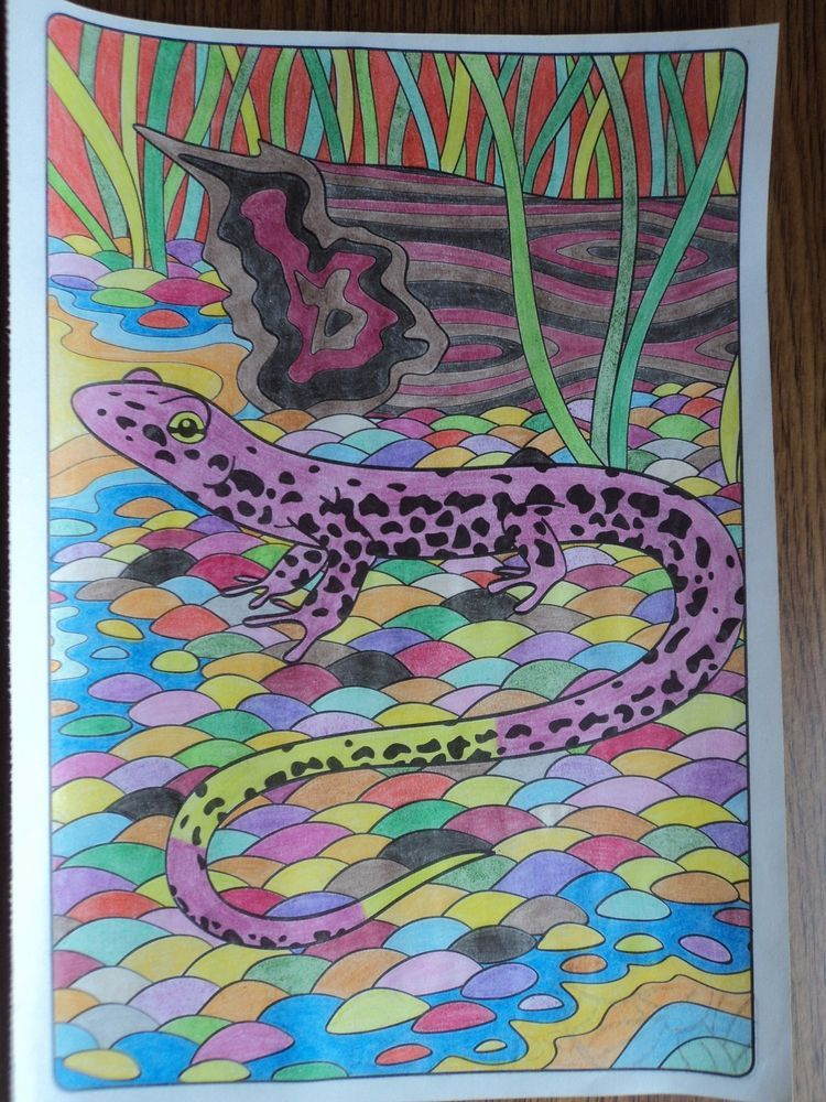 Finished Adult Coloring Book Page Nature Lizard Reptile Colored Pencil Picture
