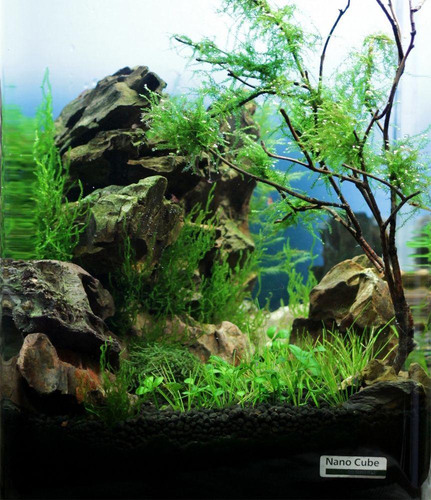 Dennerle nano cube contest 2013 quality test results for Plante nano aquarium