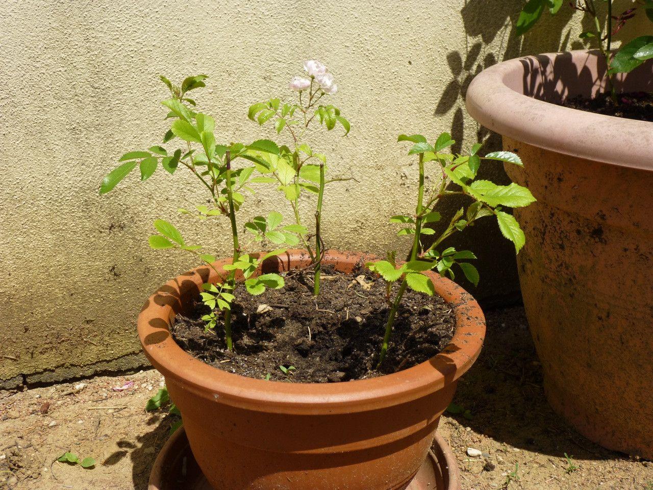 Tout ce qu'il faut savoir sur le bouturage des plantes