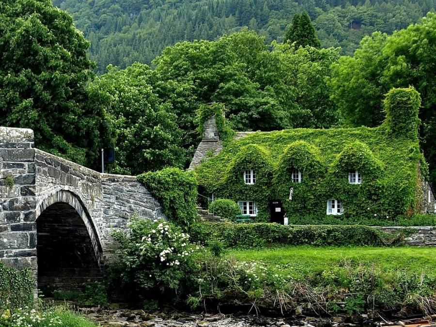 Ivy Covered Cottage House In The Woods
