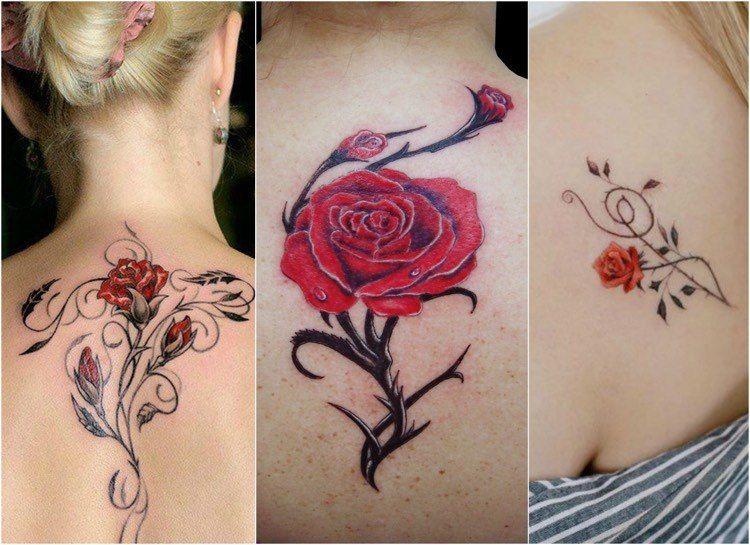 rosenranke tattoo am r cken oder schulter tattoos pinterest rosenranke tattoo tattoo. Black Bedroom Furniture Sets. Home Design Ideas