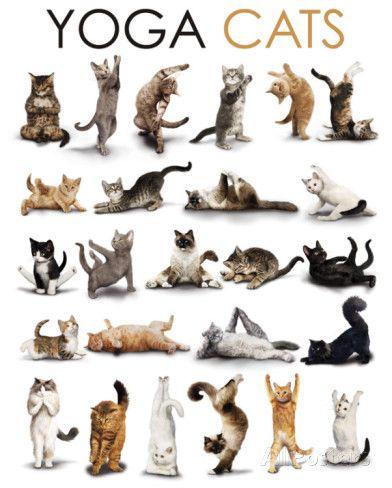 Yoga - Katzen | Cats, Cat posters and Yoga