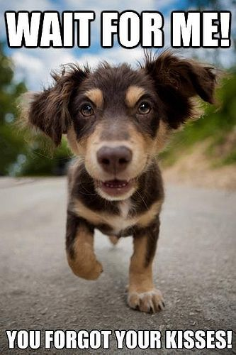 84b1566907247c580d75f7ac181af34d wait for me! dog, animal and kiss