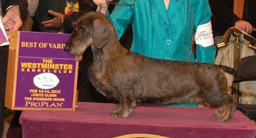 Cinders Gch Raydachs Playing With Fire V Gleishorbach Sw Breed