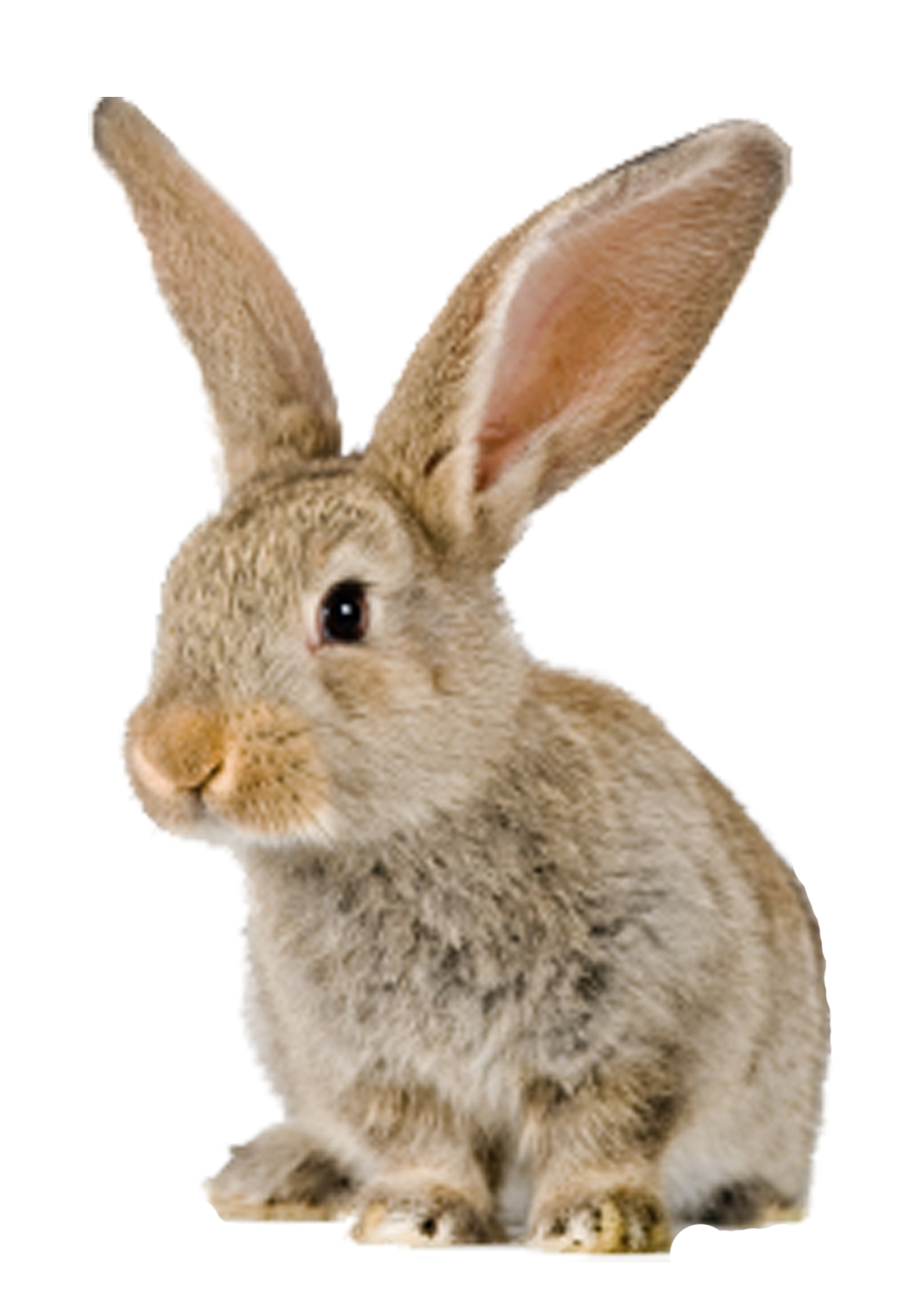 konijn Rabbit photos, Animals, Bunny wallpaper