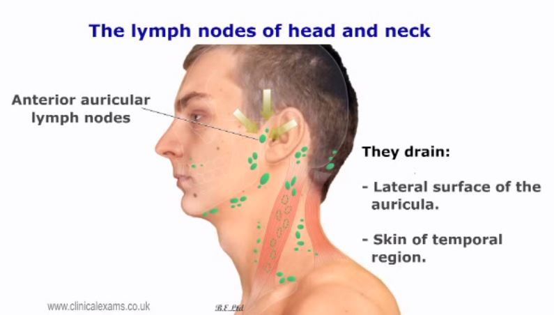 Lymph Node Mouth And Throat Anatomy And Conditions Pinterest