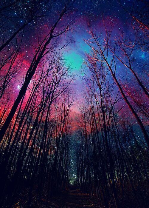 Nighttime Forest Scenery Nature Photography Beautiful Nature