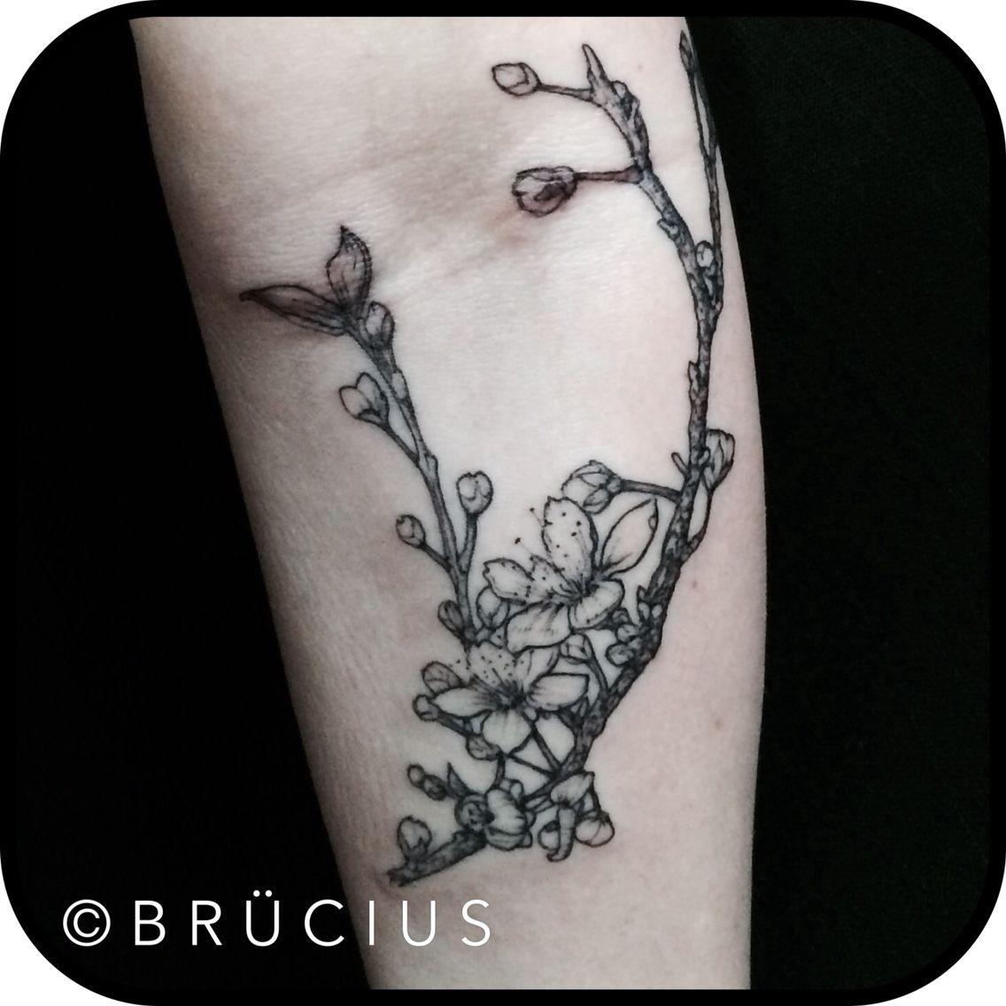 #BRÜCIUS #TATTOO #SF #SanFrancisco #brucius #natural #science #engraving #etching #sculptoroflines #dotwork #blackwork #penandink #lines #cherry #blossoms #branch #dragonfly