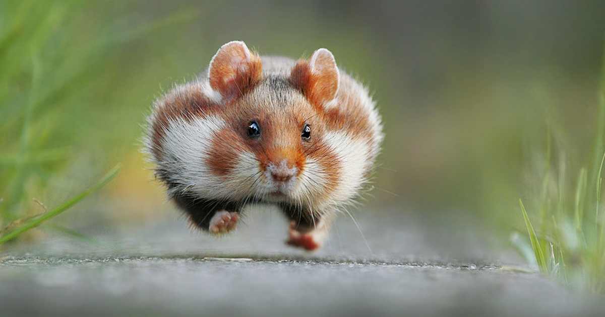 13 Funny Winners Of The 2015 Comedy Wildlife Photography Awards   Bored Panda