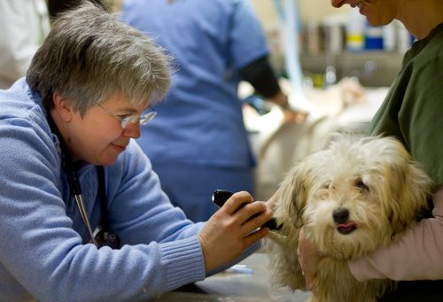 Lakeview Veterinary Clinic Madison Wi Veterinary Clinic Veterinary Lake View