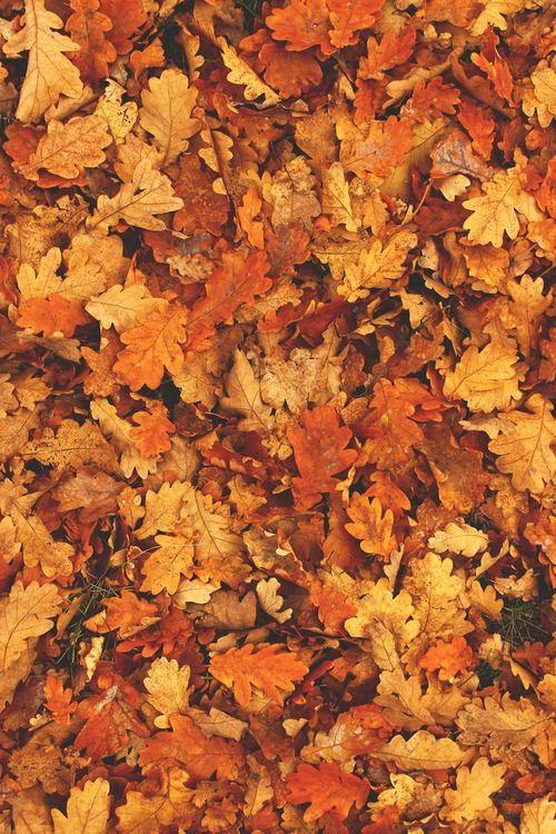 Fall Leaves Fall Fondos De Pantalla Del Teléfono Fondos