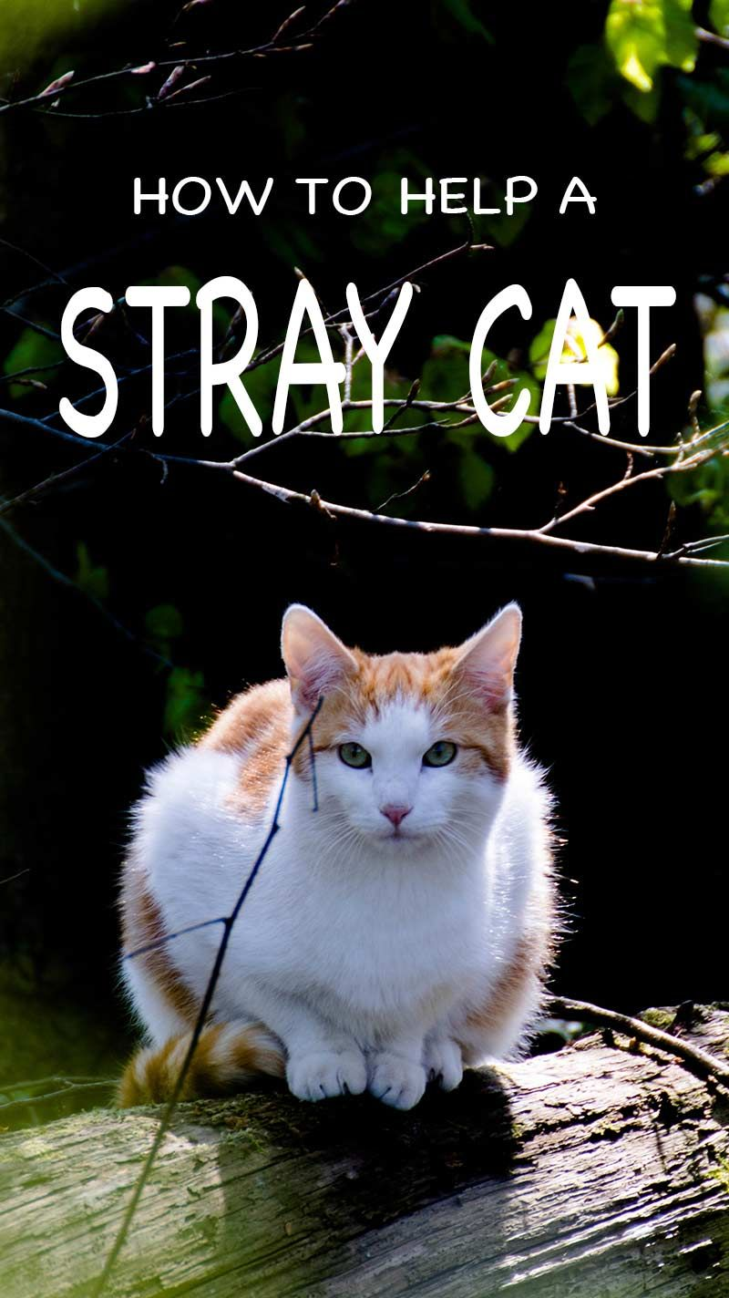 What To Feed A Stray Cat And How To Help Stray Cats And Kittens Survive Cat Care Cats Cats Outside