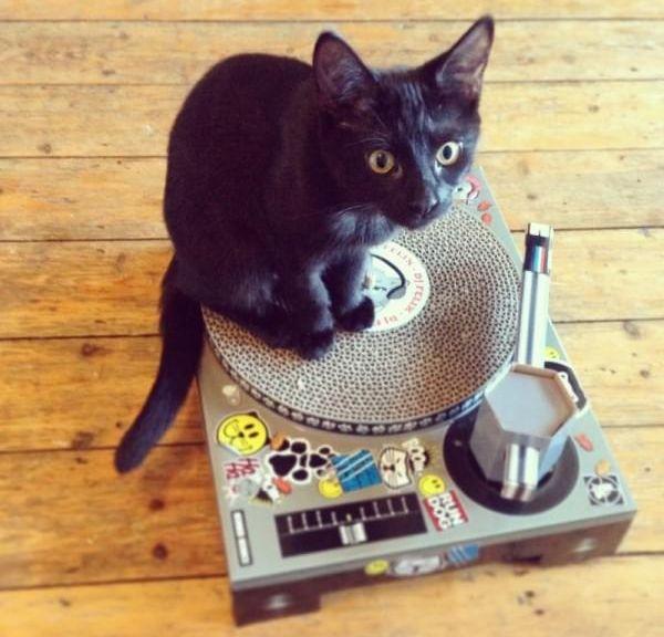 griffoir chat felix