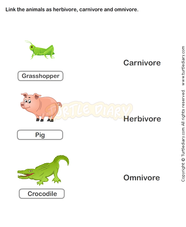 Food chain worksheet 6 science worksheets grade 2 worksheets food chain worksheet 6 science worksheets grade 2 worksheets ibookread PDF