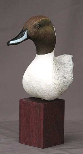 Pintail duck handcarved bust