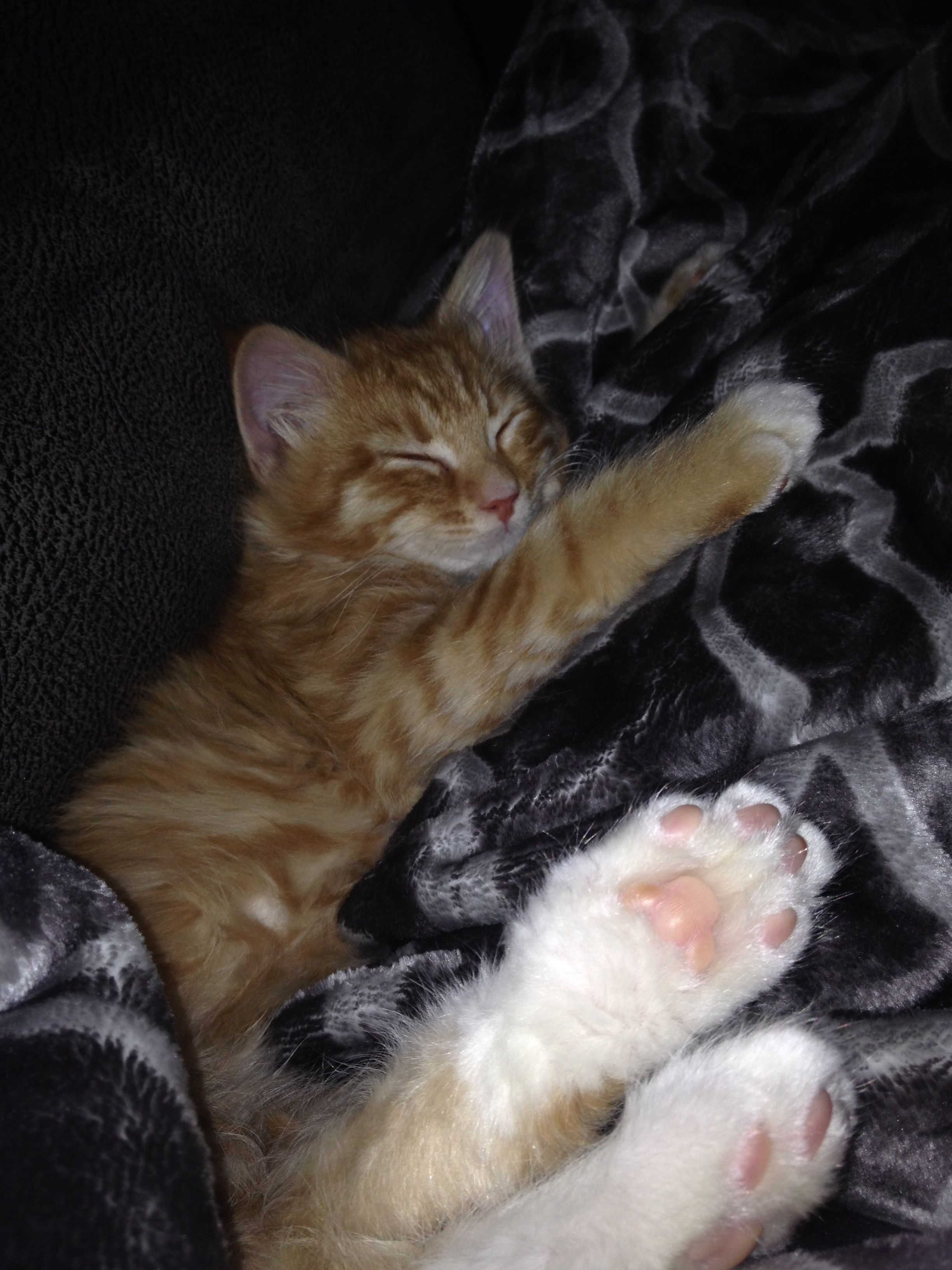 Pin On Leo My Red Maine Coon Kitten