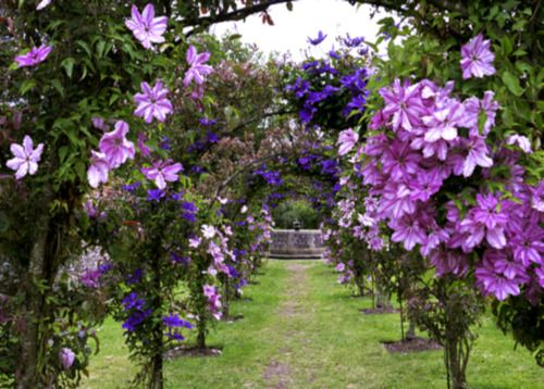 This stunning view of a plantsman's paradise can be found ...