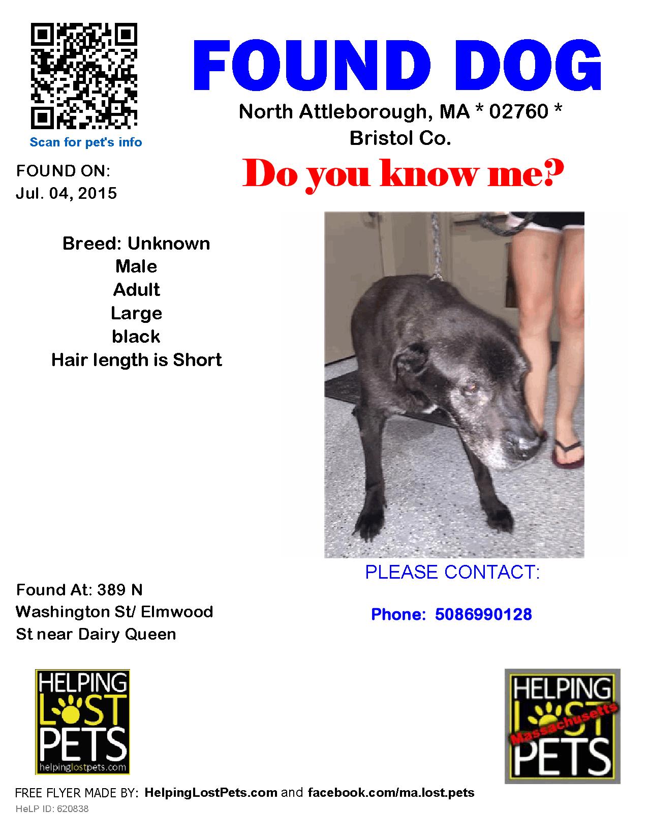 Found Dog Unknown North Attleborough, MA, United