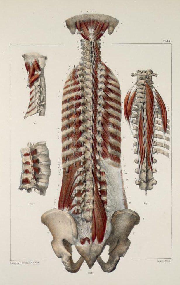 Plates from the book: Traité complet de l\'anatomie de l\'homme ...