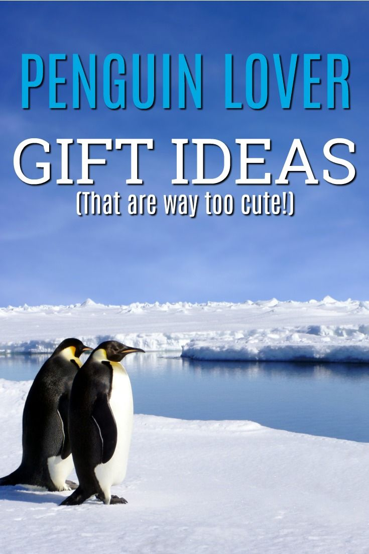 20 Penguin Gift Ideas We Had to Buy For Ourselves (too cute!) | Gift ...