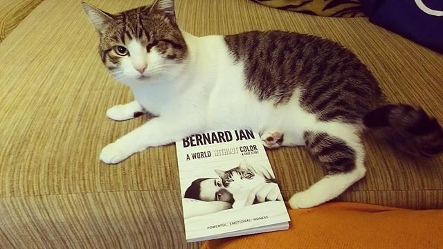 """Reposting @nicojgenes_writer: I am sure Marcel was the happiest cat in the world. If only all the animals would face the same destiny. Or humans? We can do much more to make this world a better place. What is stopping us? Read my review here for """"A World Without Color"""" by Bernard Jan. http://crwd.fr/2DXZagZ @kh_meli Your Otto is so cute and I know he is so happy with you :-) #grief #loss #love #cats #pet #hope #begood #dogood"""