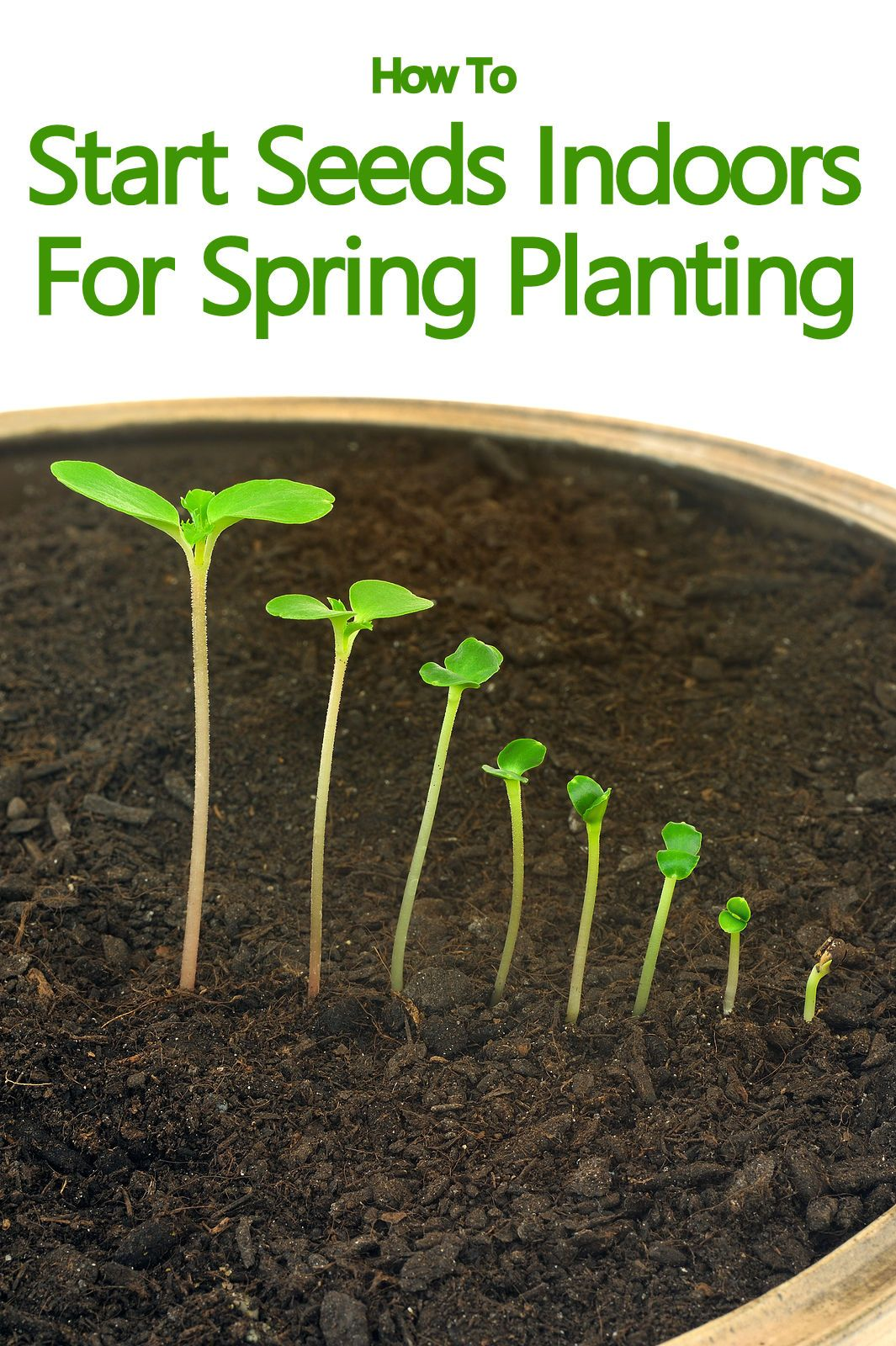 How To Start Seeds Indoors For Spring Planting