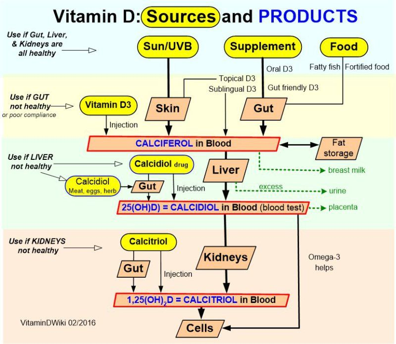 Vitamin D3 Becomes Calcidiol Which Becomes Calcitriol # ...